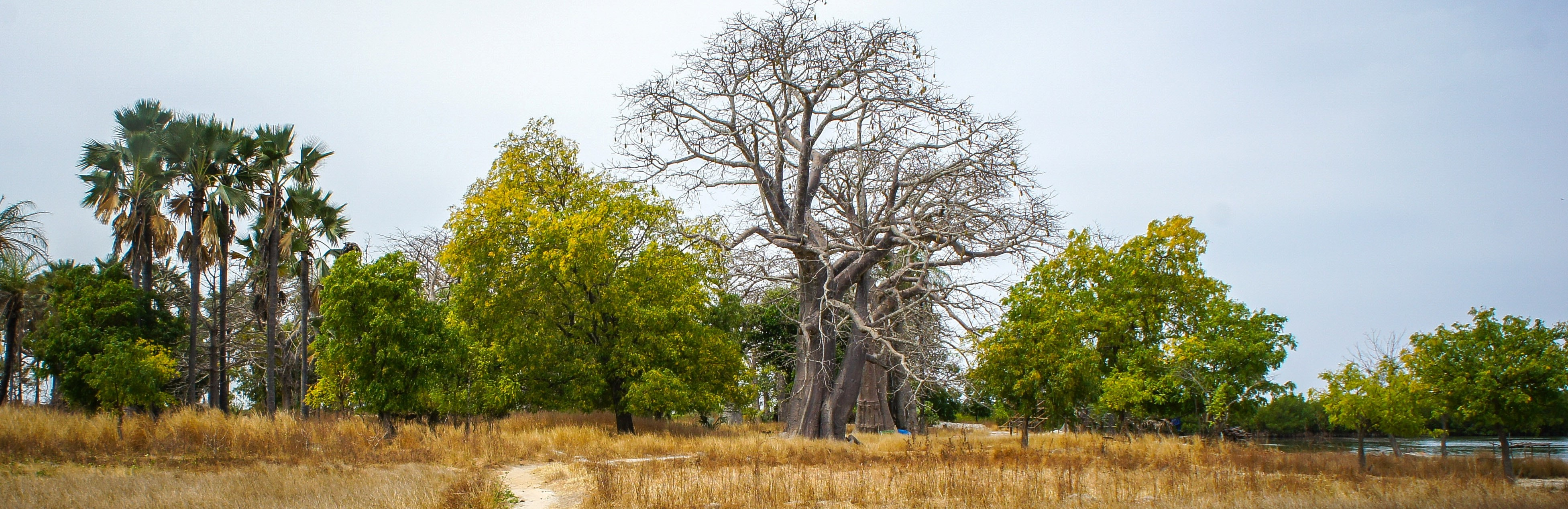 Trillion Trees: the Sahel and the Great Green Wall